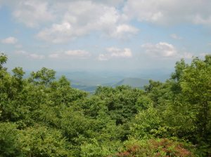 View from Springer Mountain